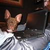 I spy on your web sites.