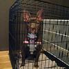 despite all my rage i am still just a dog inna cage.