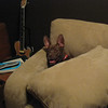 Gremlin in the couch