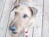 PuppiesInStarSpangledScarves_02
