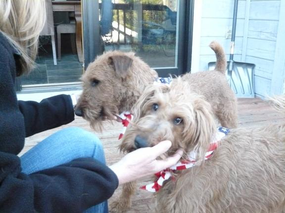 PuppiesInStarSpangledScarves_13