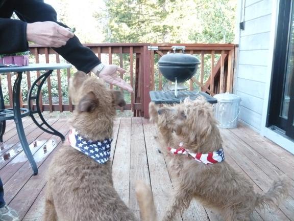 PuppiesInStarSpangledScarves_05