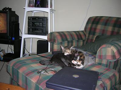 Stef's Kitties