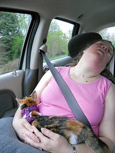 Yes, even in the car.  Look carefully and you will notice that Stitch is asleep behind her head.