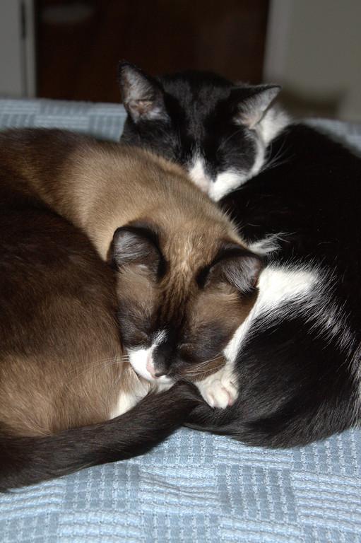 Our boys, snuggled.