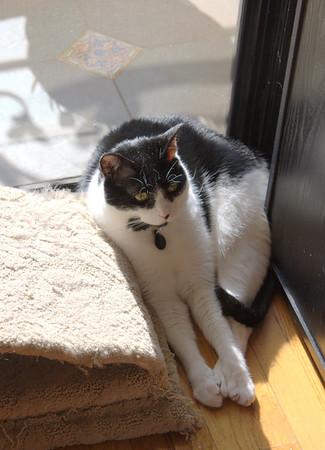 Sue, squished, so he can soak up the precious sunbeam.