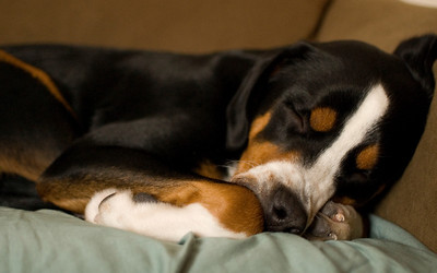 Sleeping on the couch.