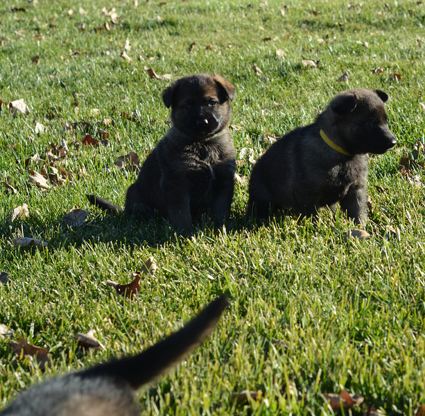 Black collar boy and Yellow collar girl<br /> Outside for the first time!<br /> November 2017