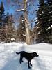 On the snowmobile trail, Feb 18-10