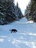 On the snowmobile trail, Feb 18-3