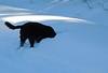 On the snowmobile trail, Feb 18-4