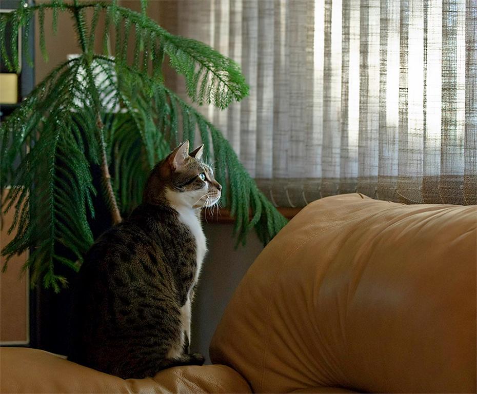 Tarzan bird watching.