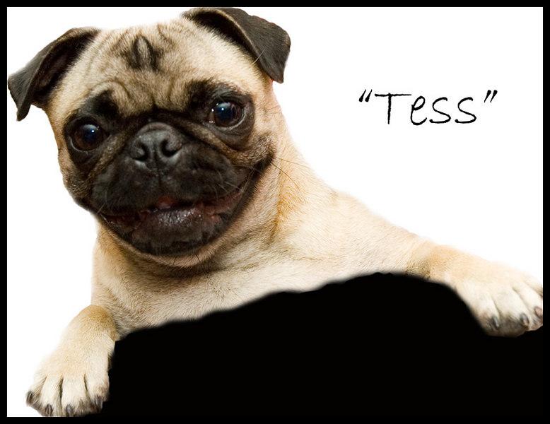 Tess #2 low res
