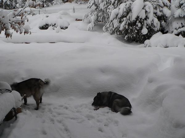 The Big Snow December 2006