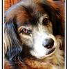 Lucas Best pet portraits, are unplanned