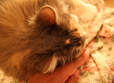 Snuggling with mom's free hand. The other hand has the heavy camera in it.