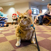 Oliver, of the TheraPAWS therapy pet group, hangs out during an open house at Thayer Memorial Library in Lancaster on Wednesday evening to teach interested residents about how their pet can become a therapy pet. SENTINEL & ENTERPRISE / Ashley Green