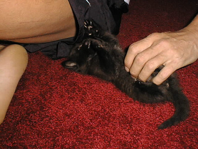 Mawley as a kitten