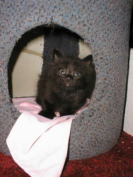 Mawley as a kitten