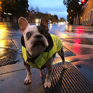 Jan 2018: First rain of the month and I'm prepared with my fancy raincoat! Thanks Mama!