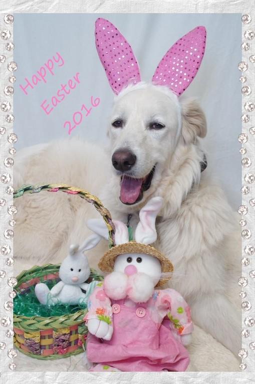 Tundra the Easter Bunny