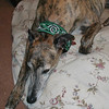Marvin wearing a Green Celtic Beast collar