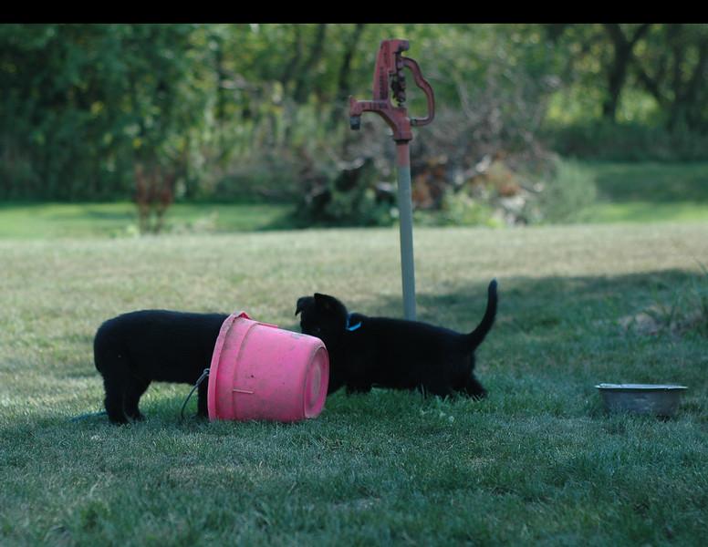 Uno (in bucket LOL) and Ugo exploring