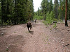 """Bullet Dog"" at Sol Vista Ski Area in the summer of 2006."
