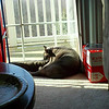 Sun Bathing<br /> <br /> Photographer's Name: Allison Campitell<br /> Photographer's City and State: Pittsburgh, PA