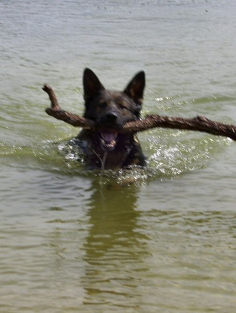 Finally, a stick big enough for that head! :o)