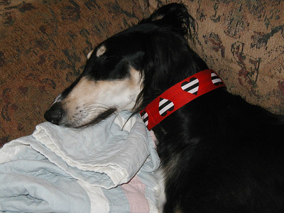 Valentine's Day collars