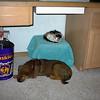 Auggie (kitten) and Fenway (puppy) sleeping