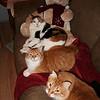 Auggie, Ripken and Simba