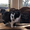 4K Test cats 2