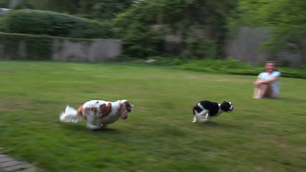 Playing in Backyard