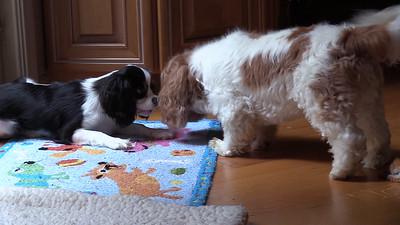 Pepper Wants Stuarts Dog Bone