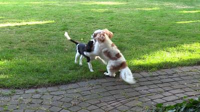 Wrestling in Backyard
