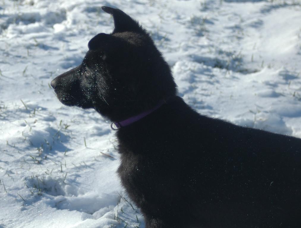 """Betty""<br /> First snow day of the year, 12.21.2012"
