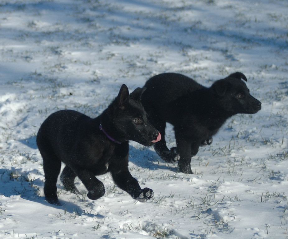 Betty (left) and Wilma (rght) on the move<br /> First snow day of the year, 12.21.2012