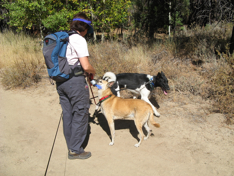 We took the dogs to Spooner Lake in the pass between Carson City and Lake Tahoe. We brought along plenty of string cheeze for training.