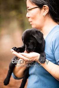 Gordon Webber's Black Lab Puppies