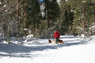 Mt Charleston, Las Vegas, NV,  February 2007. Golden retrievers fun in the snow day! Photo by: Jennifer Hetterscheidt, Las Vegas, NV