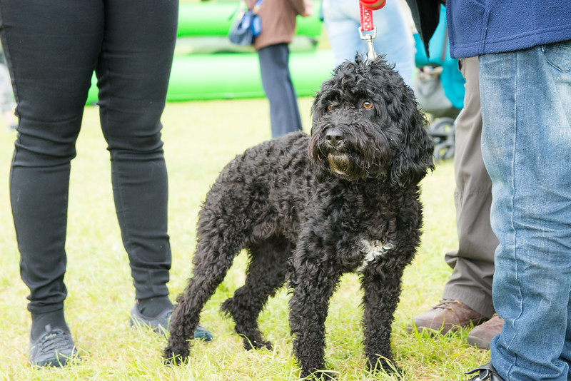 Birkenhead Park Fun Dog Show