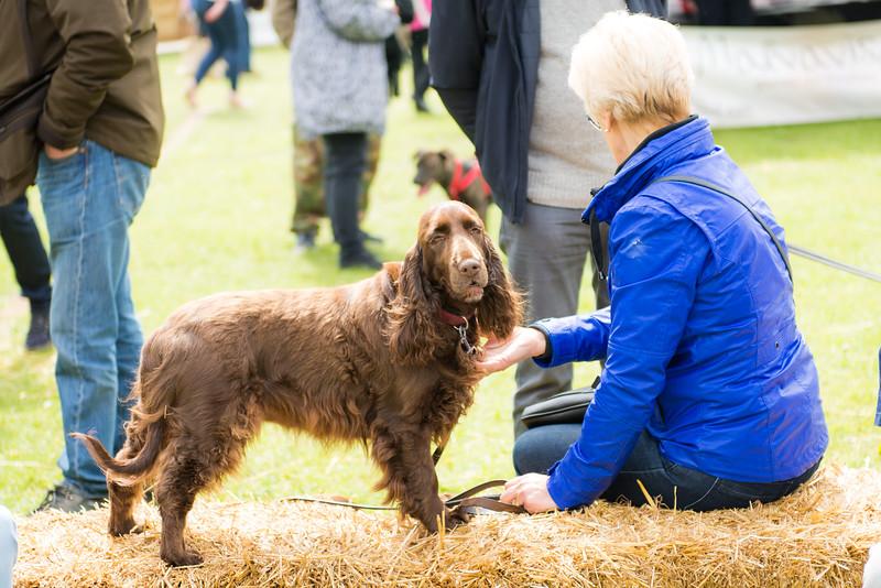 Birkenhead Park Fun Dog Show