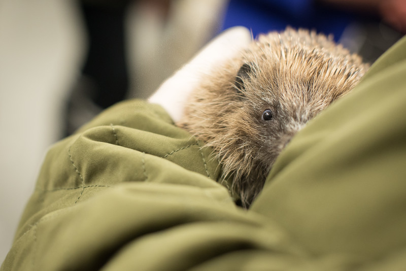 Wirral Animal Sanctuary Hedgehog Rescue Induction