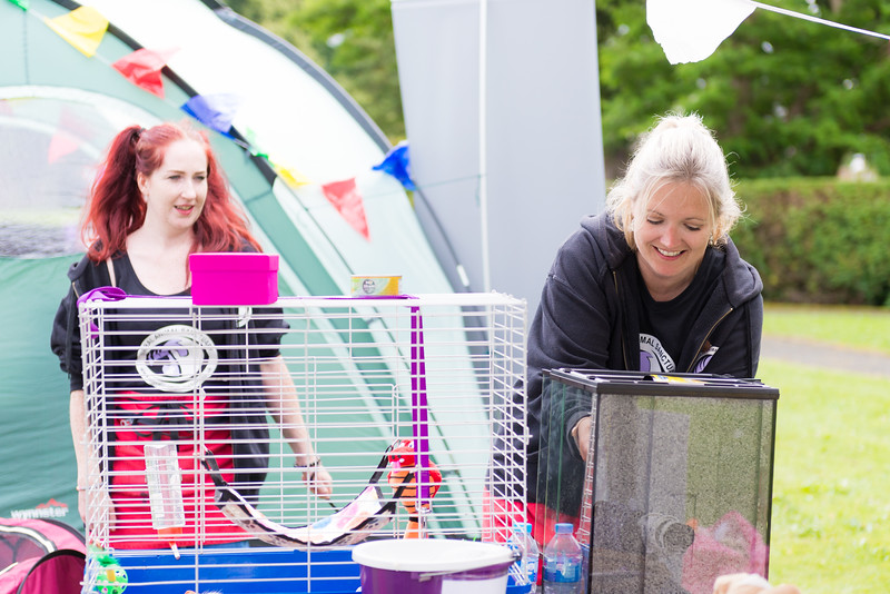 New Ferry Festival - Wirral Animal Sanctuary