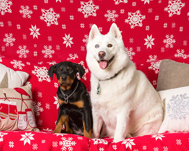 Michele's holiday dogs