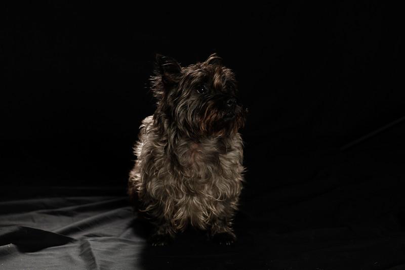 DoggoPortrait-30