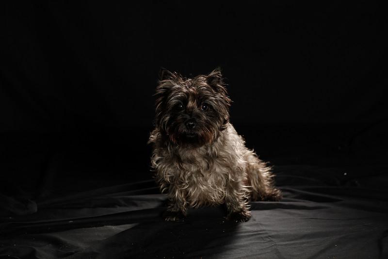 DoggoPortrait-48