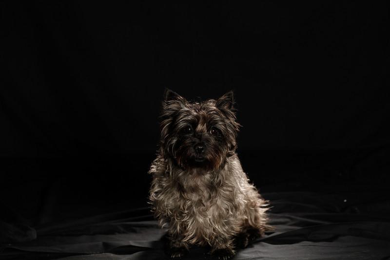 DoggoPortrait-54